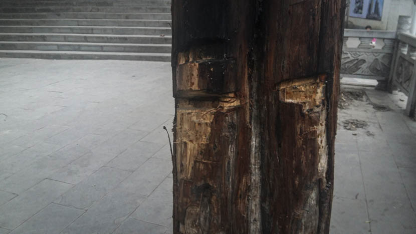 A tree in front of the Nayong County party building in Guizhou province has been slashed by a machete, Nov. 24, 2015.  Duan Yanchao/Sixth Tone